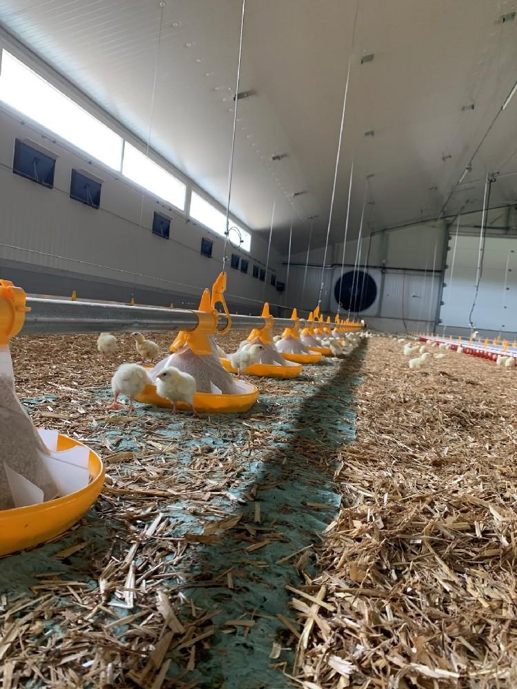 alimentation volailles assiettes landmeco